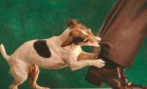 Укусила собака что делать