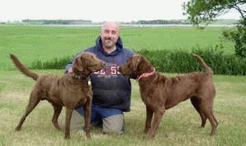 Собаки породы Чесапик бей ретривер с хозяином