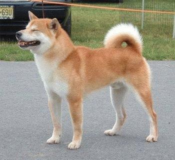 Собаку Кисю