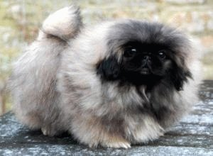 Собака чешется - причины и методы устранения