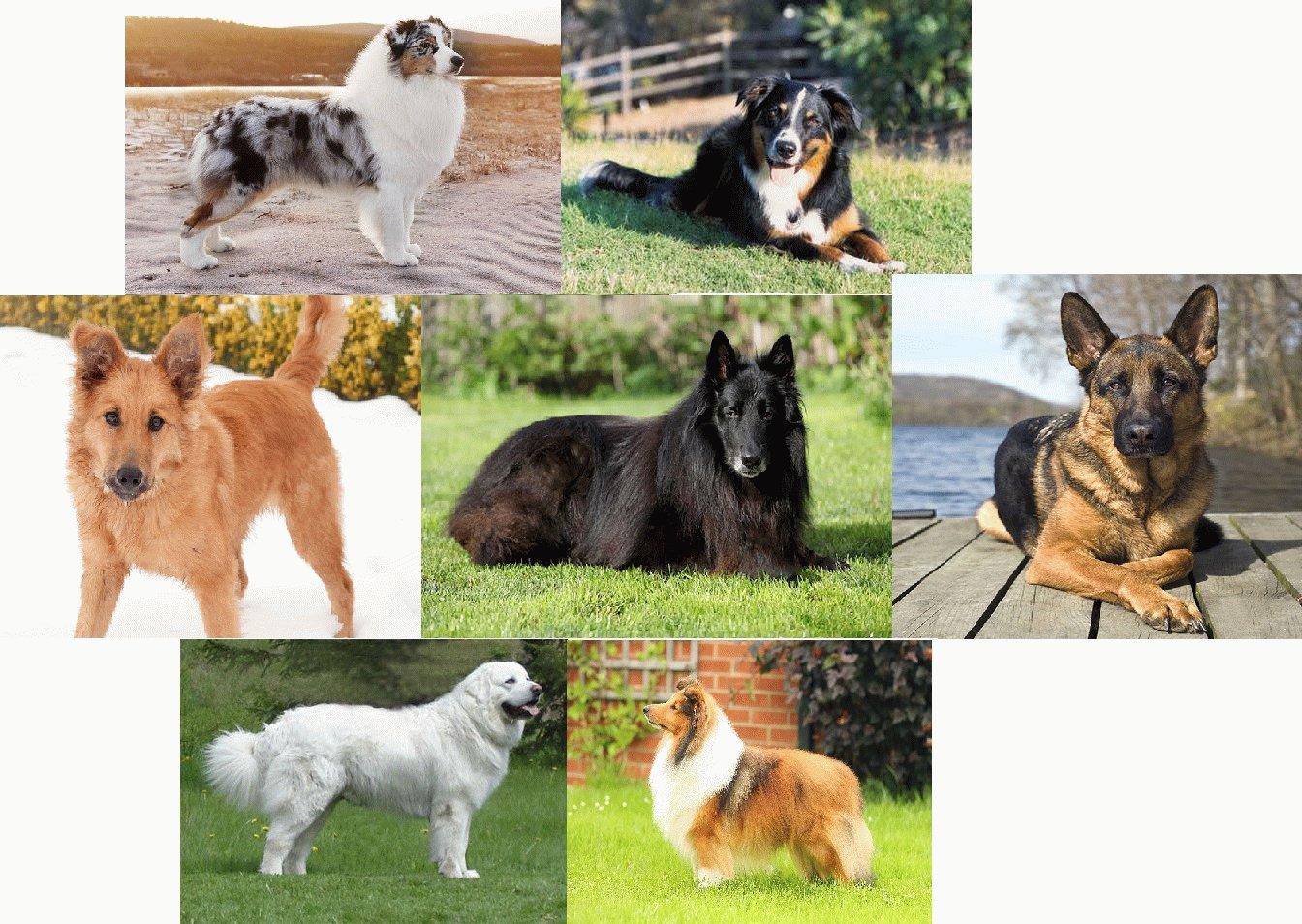 Топ-20 самых красивых пород собак во всём мире