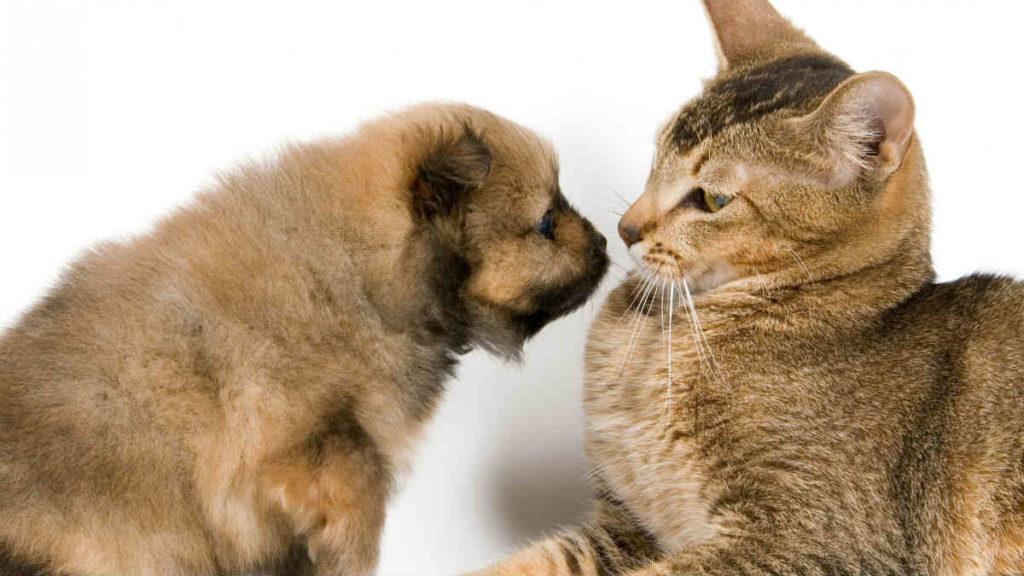 Щенок и взрослая кошка